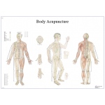 Fabrication Enterprises Anatomical Chart: Acupuncture Body, Laminated