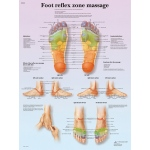 Fabrication Enterprises Anatomical Chart: Foot Massage, Reflex Zone, Laminated