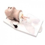 Nasco Airway Larry Adult Airway Management Trainer With Stand