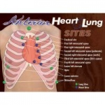 Nasco Anterior Heart and Lung Sites Poster